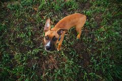 Aanbiddelijke rashond in park Stock Foto