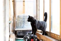 Aanbiddelijke zwarte richels op balkon bij middag stock afbeelding