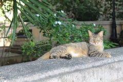 Aandachtige kat Stock Foto's