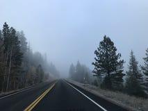 Aandrijving in het bos met mist royalty-vrije stock foto's
