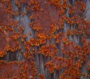 Aangetaste roestige textuur Stock Afbeeldingen