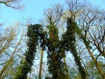 Aangevallen door boom Stock Fotografie