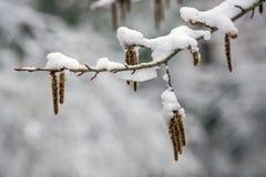 Aankomst van de winter sneeuw Op de sneeuw-sneeuwafwijkingen van sneeuw royalty-vrije stock fotografie