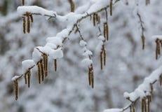 Aankomst van de winter sneeuw Op de sneeuw-sneeuwafwijkingen van sneeuw royalty-vrije stock afbeeldingen