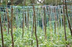 Aanplanting in het Bos stock afbeeldingen