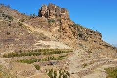 Aanplanting van koffie, Yemen royalty-vrije stock foto's