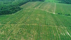 Aanplanting van wijngaardensatellietbeeld stock footage