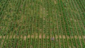 Aanplanting van wijngaardensatellietbeeld stock video