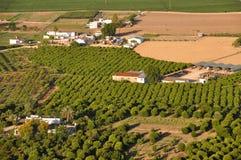 Aanplanting in Zuidelijk Spanje Royalty-vrije Stock Afbeeldingen