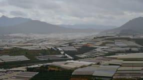 Aanplantingen op berg in Dalat, Vietnam Royalty-vrije Stock Foto