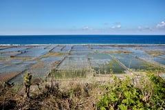 Aanplantingen van zeewier op strand in Bali, Nusa Penida Stock Foto's