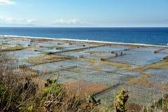 Aanplantingen van zeewier op strand in Bali, Nusa Penida Stock Afbeeldingen