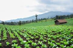 Aanplantingsgebied bovenop de heuvel stock foto