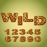 Aantallen die tijgerbont imiteren Royalty-vrije Stock Foto