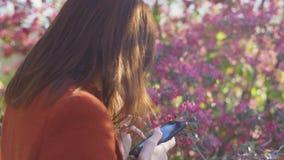 Aantrekkelijke jonge roodharige smatphone van het vrouwengebruik in park bij zonsondergang De lentebloemen van kers of sakurabloe stock footage