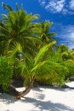 Aantrekkelijke palmtrees Royalty-vrije Stock Fotografie
