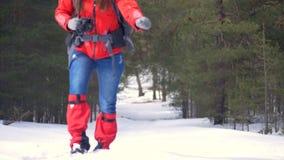Aantrekkelijke vrouwelijke wandelaar die in de winterbos lopen stock footage
