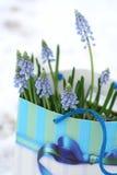 Aanwezige bloem Royalty-vrije Stock Afbeeldingen
