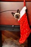 Aanwezige Kerstmis Royalty-vrije Stock Foto