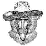 Aap, baviaan die, hond-aap, aap traditionele Mexicaanse hoed dragen Klassiek hoofddeksel, fiesta, partij vector illustratie