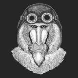 Aap, baviaan, hond-aap, aaphand getrokken beeld voor tatoegering, embleem, kenteken, embleem, flard Koele dierlijke dragende vlie stock illustratie
