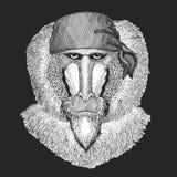 Aap, baviaan, hond-aap, aap Koele piraat, zeeman, seawolf, zeeman, fietserdier voor tatoegering, t-shirt, embleem, kenteken, embl stock illustratie