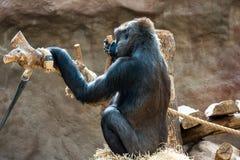 Aap bij de dierentuin stock afbeeldingen