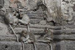 Aap bij oude tempel Stock Fotografie