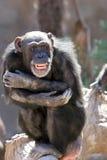 Aap die en bij menigten bij de dierentuin lacht grijnst Stock Foto