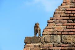 Aap die zich op Stupa bevinden Royalty-vrije Stock Afbeelding