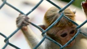 Aap in een Kooi in Sri Lanka stock videobeelden