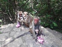 Aap en daar leuke baby bij dambullarots van Sri Lanka stock foto
