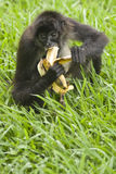 Aap en een banaan stock afbeelding