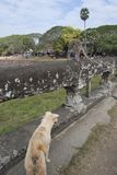 Aap en hond Stock Foto's