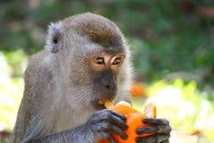 Aap en sinaasappel stock fotografie