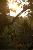 Aap en zonsondergang Stock Fotografie