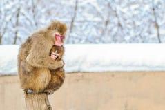 Aap Japanner op sneeuw Royalty-vrije Stock Foto
