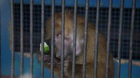 Aap in kooi bij dierentuin stock videobeelden