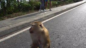 Aap met een nadenkende blik die een banaan eten Een pak apen Denkt om te nemen of niet nemen? stock videobeelden