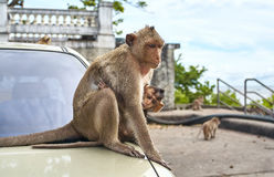 Aap op de auto, Thailand Stock Foto's