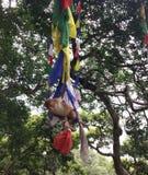 Aapplateren onder boom royalty-vrije stock fotografie