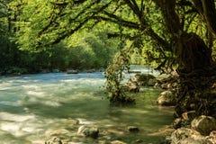 Aapsta-Gebirgsfluss, Abchasien Stockbilder