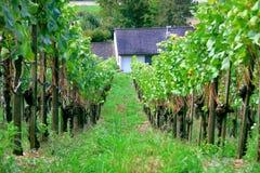 Aarau Royaltyfria Bilder