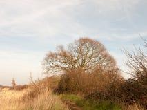 aard achtergrondboom met riet en de kant van de hemellente van bank stock foto