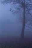 Aard Autumn Foggy Tree Landscape Stock Foto's