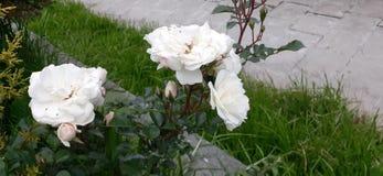 Aard begaafde mooie bloemen voor ons stock afbeelding