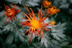 Aard-bloem-0002 Royalty-vrije Stock Afbeelding