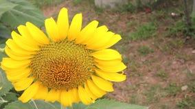 Aard, bloem, de zomer stock footage