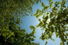 Aard. Bomen, zon en blauwe hemel Royalty-vrije Stock Afbeeldingen