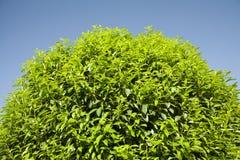 Aard. Bomen, zon en blauwe hemel Royalty-vrije Stock Afbeelding
